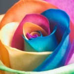 fiore-arcobaleno