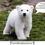 orso_autodifesalimentare_it_400