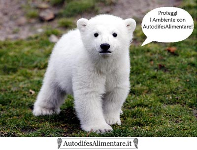 orso_autodifesalimentare_it_400