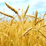 corso di nutrizione: saper scegliere i cereali