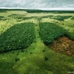 Salviamo l'Amazzonia con le nostre scelte alimentari