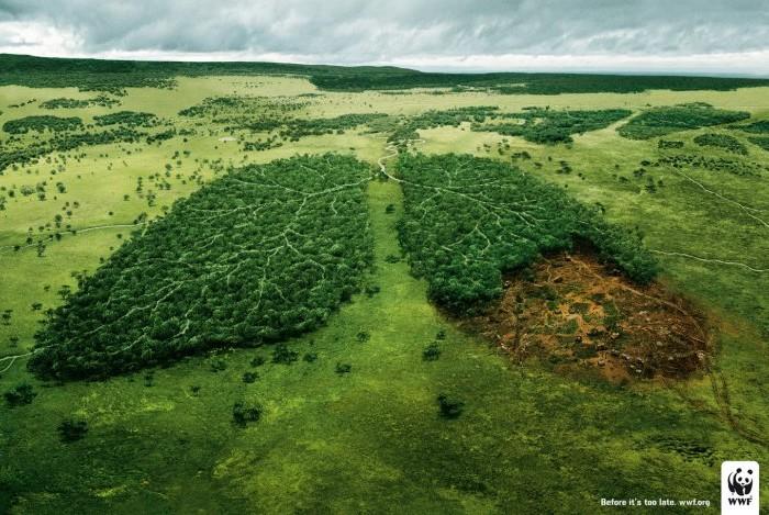 Salviamo l'Amazzonia con le nostre scelte alimentari - WWF