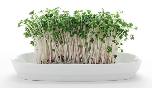 corso nutrizione: germogli